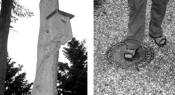 Искусственное гнездо на дереве соединено пневматикой с помпой на дорожке