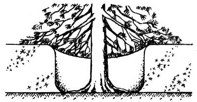Траншея круговая (вокруг ствола)